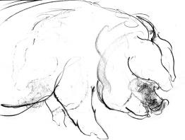 Pig_03
