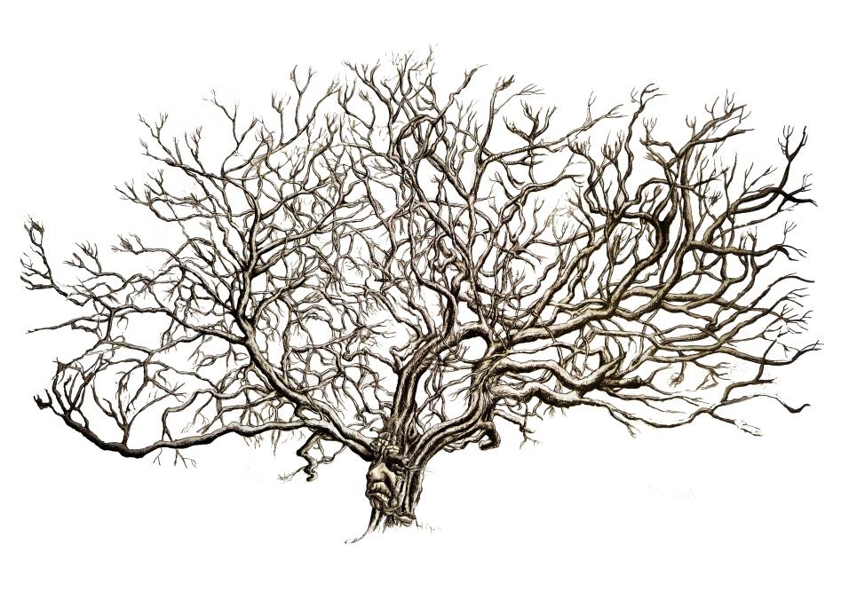 Tree face 001 A3